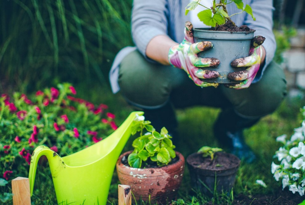 How To Grow Bigger Plants for Your Garden